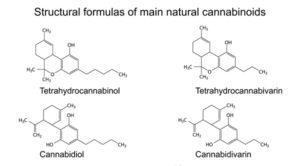 cannabinoids-101-3b
