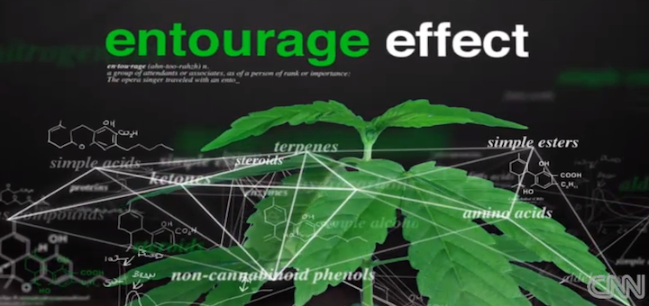 entourage-effect-Medical-marijuana