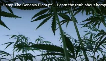 genesis cbd oil