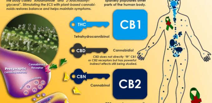 5 Ways CBD Can Help IBS Symptomshighlandpharms.com
