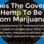 Why Does The Government Consider Hemp To Be Different From Marijuana?