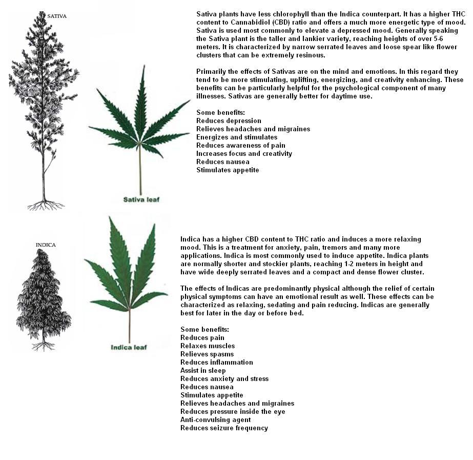 How is Hemp Different from Marijuana?  Hemp vs. Marijuana