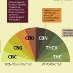 Article: What Is The Endocannabinoid System?
